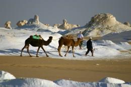 Kamelwanderung in der Weißen Wüste