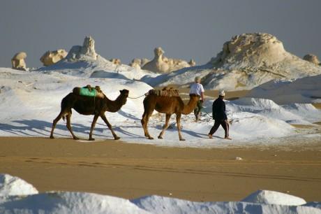 Kameltrekking in der Weißen Wüste